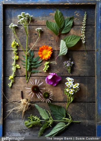 Plantes qui soignent : que faut-il acheter en jardinerie ?