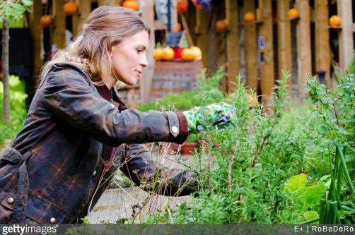 Nos conseils de jardinage pour faire pousser des plantes médicinales.